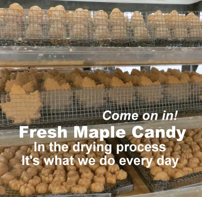 Maple Candy during the drying process